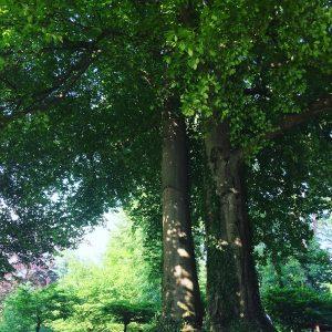 Bäume spenden Kraft