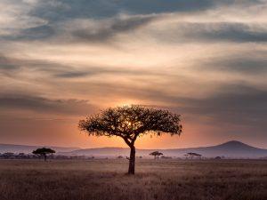 Die Herzlichkeit Afrikas