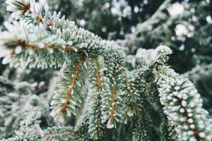 Herzzeit / Winterzeit